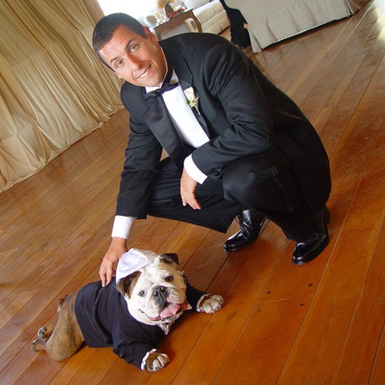 Actor Adam Sandler and his beloved bulldog Meatball