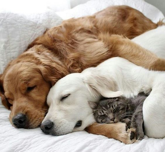Cat sleeping with his dogs friends