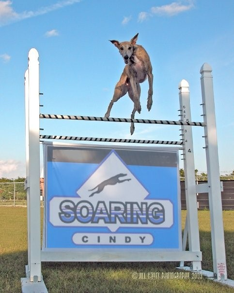 Soaring for cindy