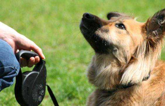 Take control of your dog at the park