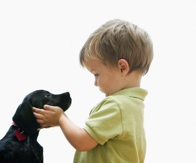 A dog and a boy introducing each other