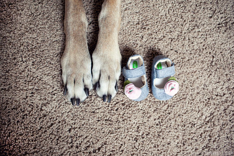 Tips on preparing your dog for the new baby