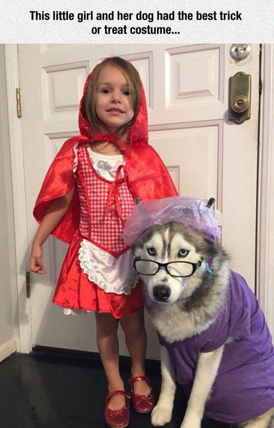 Cute husky costume for Halloween with her Hooman