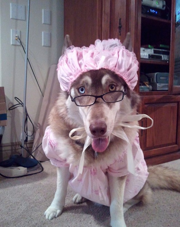Sweetest wolf granny costume for halloween