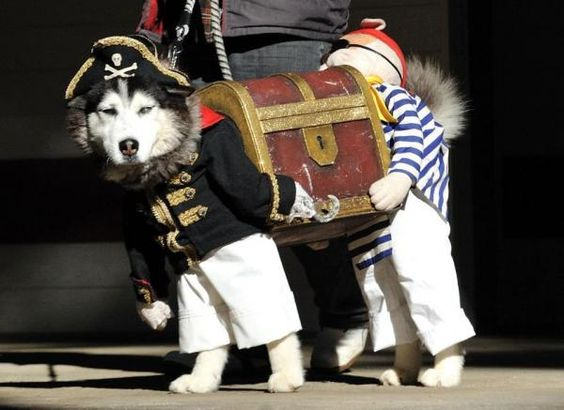 Pirate costume for your husky