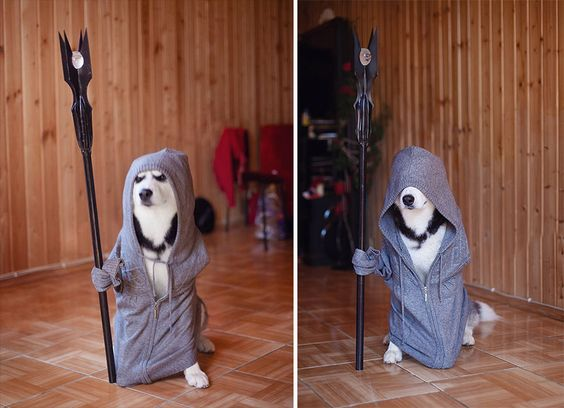 This darth vader Costume for your cute husky