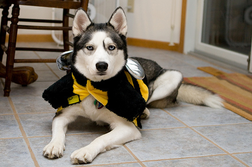 Cute bumblebee husky costume for halloween