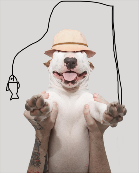 Jimmy the bullterrier in a creative picture with fish ilustration
