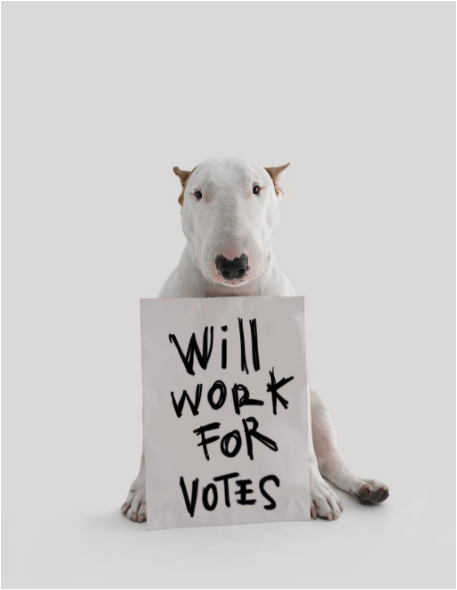 Jimmy the bullterrier asking for votes
