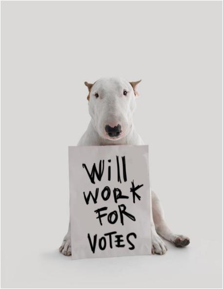 Jimmy the bullterrier asking for votes