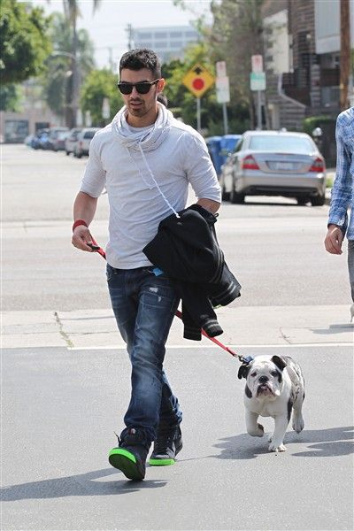 Joe Jonas has a best friend dog, an english bulldog