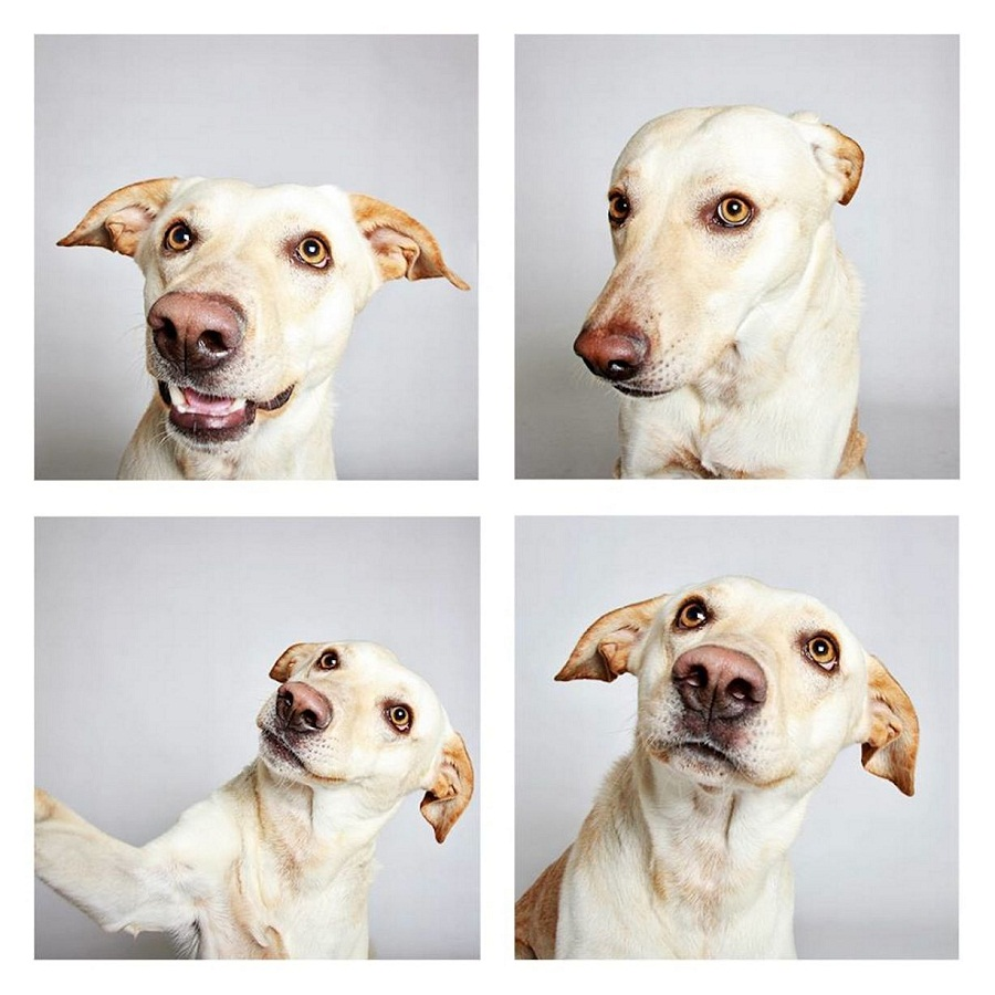 Labrador photo booth