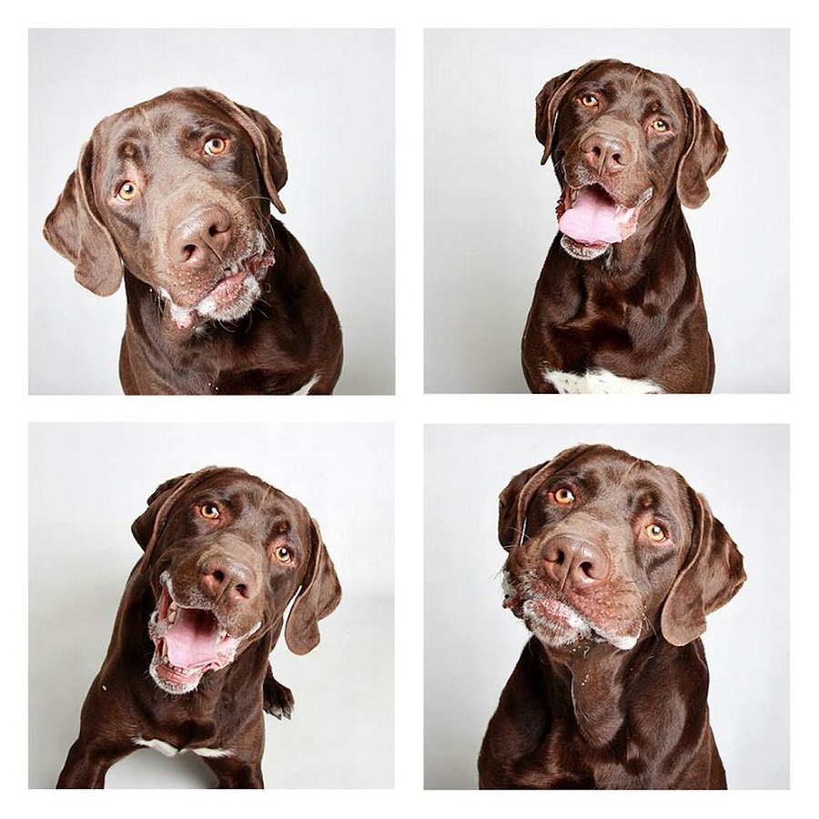 Source: https://i2.mirror.co.uk/incoming/article5495150.ece/ALTERNATES/s1227b/2-year-old-Chocolate-Labrador-Wyler.jpg