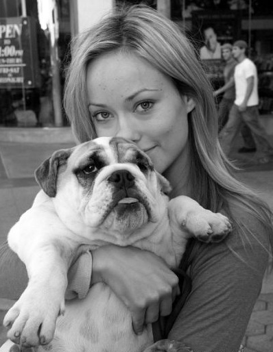 Olivia Wilde the amazing actress spend a lot of time with her beautiful english bulldog Lola