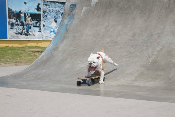 otto-bulldog15