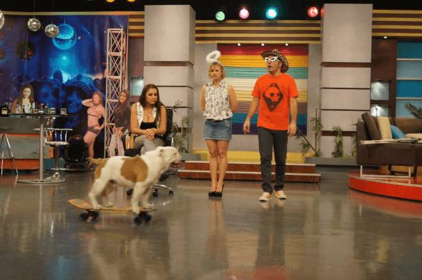 otto-bulldog16