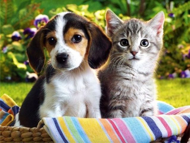 How To Introduce Kitten To Dog And Cat