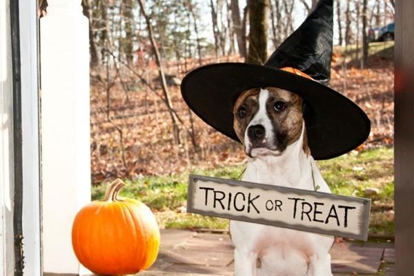Trick or Treat Halloween Costume