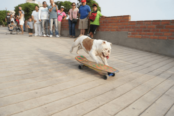 ottobulldog14