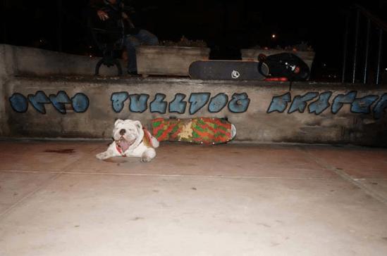 ottobulldog140