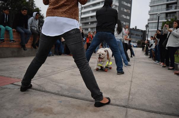 ottobulldog142