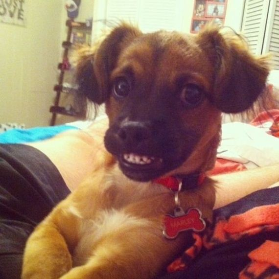Dog smiling in an awkward way