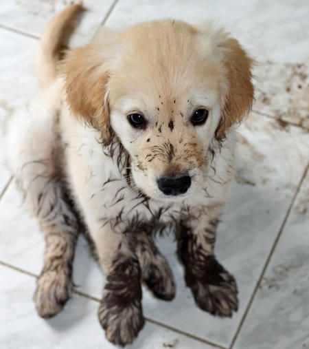 Can Dogs Get Rug Burn On Their Paws: 25 Stuff No One Told You Before Getting A Dog (Part 2