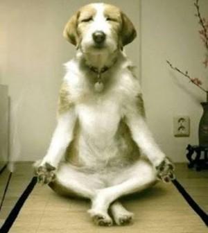 Dog metitating