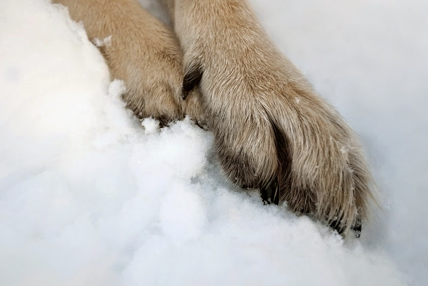 Paw Care is a must for your dog during winter