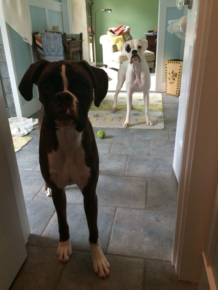 No privacy with dogs around
