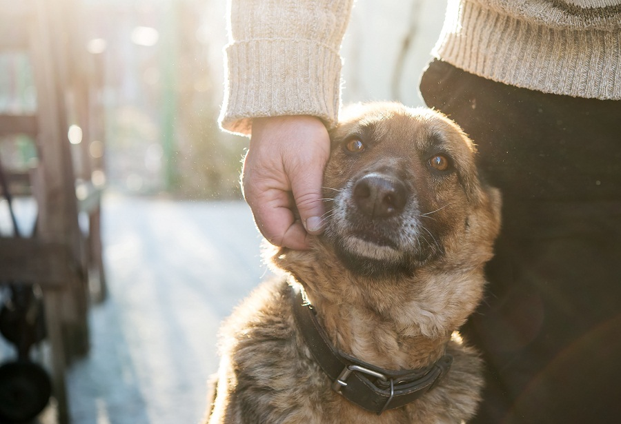 Walk your dog during sunshine hours on winter