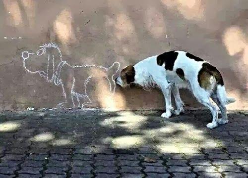 Dog sniff everything during walk