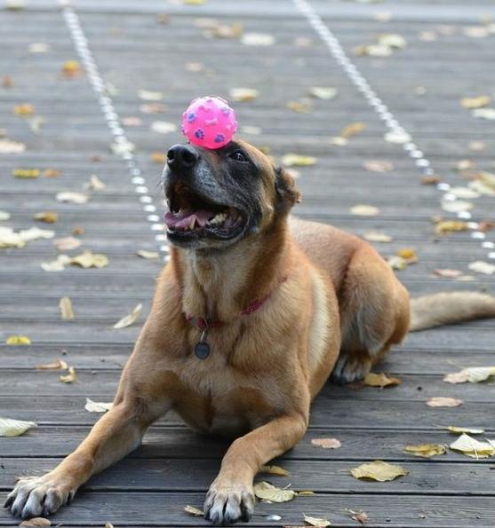 Dog training can be hard