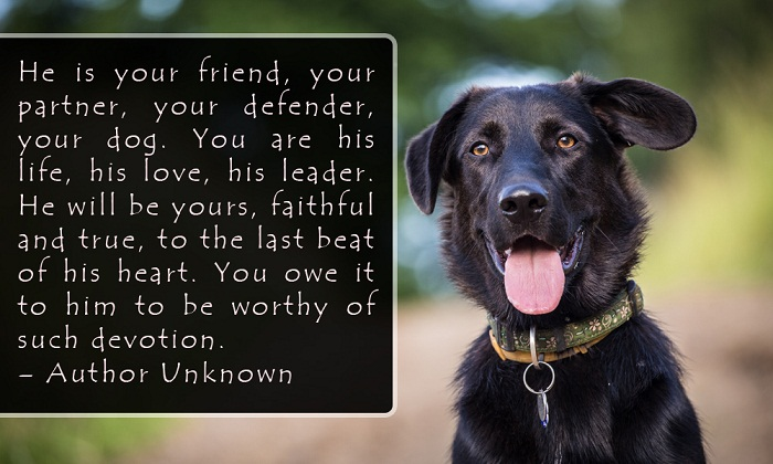 Dogs are indeed our best thing in life