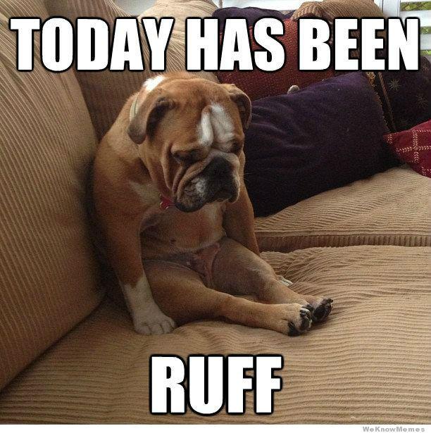 Sad Bulldog dog