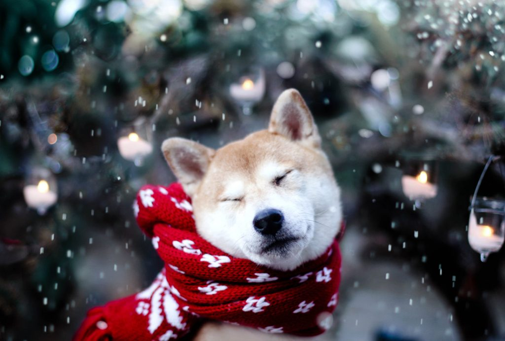 15 Winter Tips For A Happy Dog