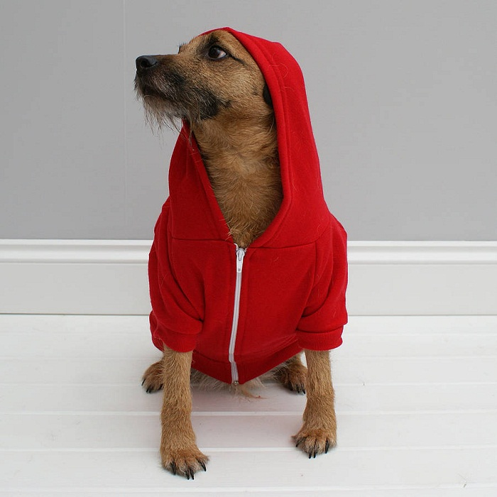 Dog hoodies are great present for your beloved pet