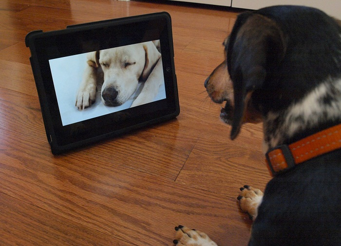 Dog tv will keep your pet entertained