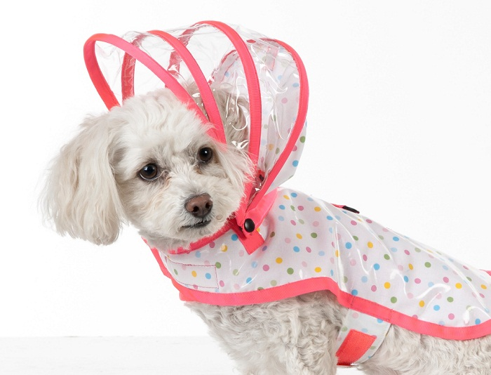 Dogs raincoat are a great present for your dog