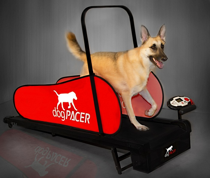 Dog treadmill, expensive gift but worth every penny