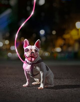 Litey Leash is always a good gift for your dog for holidays