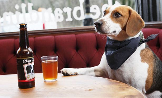Buy your dog a beer so you can enjoy a movie night together