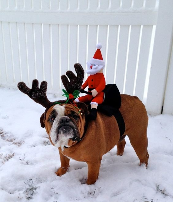 Santa lost his sled and presents will be mailed !!