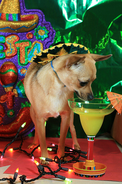 Preaper a margarita for your dog so you can celebrate together