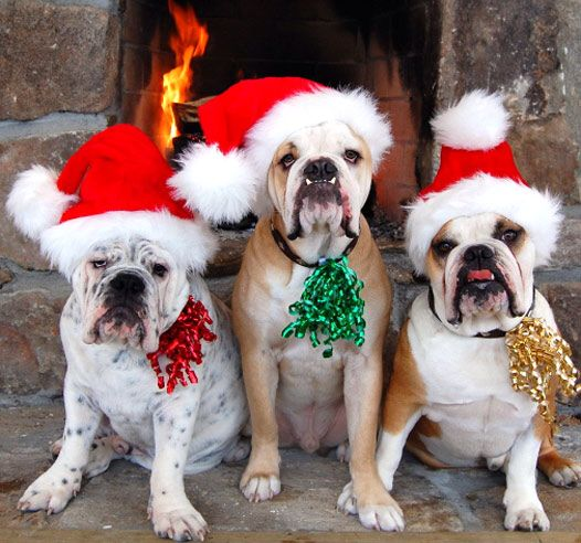 Merry Christmas from this cute pack