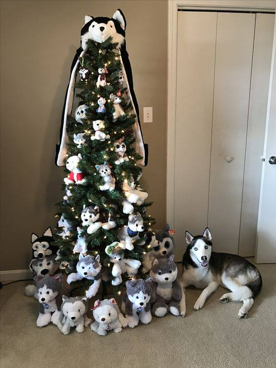 Most liked Husky picture of December