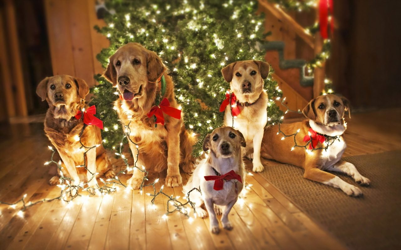 Holiday Safety Tips for Your Pets - Inside Dogs World