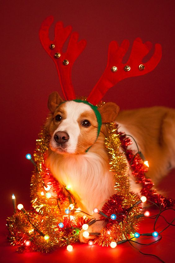 Tinsel are a very dangerous ornament for dogs