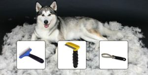 5 Steps How to Groom a Siberian Husky