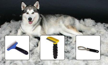 grooming-huskies